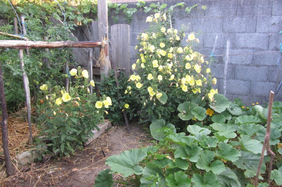 un jardin  pour nos  abeilles…