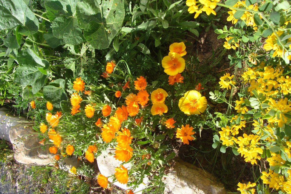 le jardin de sherazade